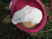 5 niedliche Rex Kaninchen