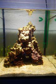 Meerwasser Aquarium Mini Riff Cube