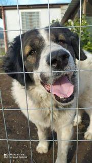 Adoption Hund Rüde Mischling