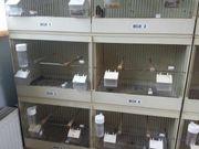 Graf Vogelzuchtboxen