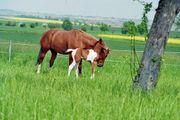Aufzuchtplatz für Fohlen oder Jungpferd