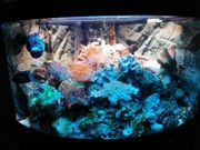 Meerwasser Aquarium Salzwasser Fluval 190