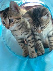 KatzenKatzen