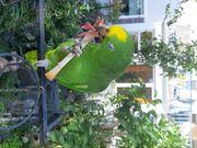 Biete Papagei neues Zuhause
