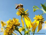 Saatgut für Bienen Hummeln und