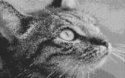 Vorlage für Ministeck Cat1 80x60cm