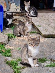 Katzebabys suchen ein Zuhause
