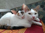Kitten Katze Kater Katzenbaby 15