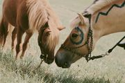 Ferienspiele - Reiterfreizeit - Pferde - Koppelübernachtung für