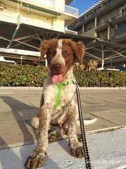 Junghund Max wo sind seine
