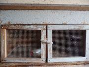 Hasenstall Stall Meerschweinchen Unterschlupf Kaninchen