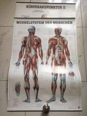 Medizinische Poster 3 Stück Muskelaufbau