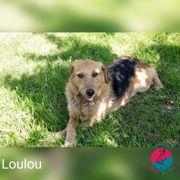 Loulou - Wartet auf ihren Icebreaker