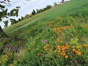Suchen Garten- Wiesengrundstück zum Kauf