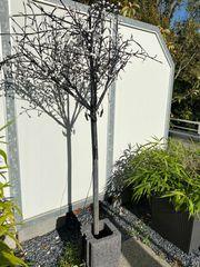 LED Baum Gartenbeleuchtung Außenbeleuchtung Kirschblütenbaum