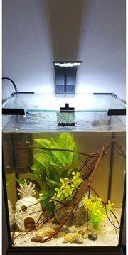top komplettes Nano aquarium