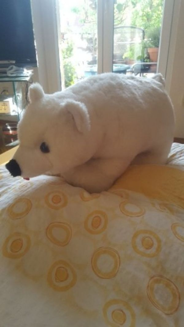 Knut der Eisbär