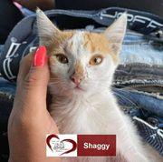 Shaggy sucht ein Zuhause