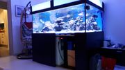 Meerwasseraquarium Lebensgestein