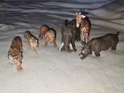 Schleich Tiere Wild Life 7