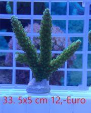 Meerwasser Aquarium Korallen