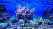 Steinkorallen und Weichkorallen