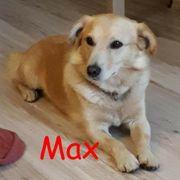 Liebenswerter Busche Max