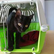 Kätzchen Peggy ist bereit ihren