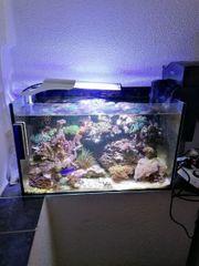 Meerwasseraquarium Nano 45Liter