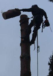 Baumschnitt Baumpflege Baumfällungen stückweise Baumgutachten