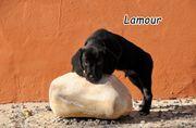 Möchten Sie Lamour adoptieren