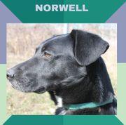 NORWEL - ein sehr lieber Rüde