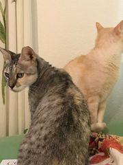Notfall - Katzen Trio Grace Pinko