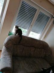 couch gebraucht zu verkaufen