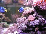 Meerwasser Aquarium 300 Liter KOMPLETT