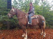 Einige KB-Pferde für Hobbyreiter -Freizeit