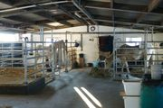 Paddock-Box in Offenstall ab September