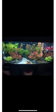 Aquarium Juwel 110 primo led