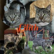 Kitten Baby Katze Lilith kastriert