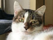 Liebes verspieltes Katzenmädchen 1 J