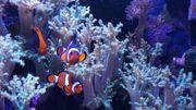 Korallenblöcke und Fische abzugeben