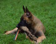 Hundeschule dogs2life Welpengruppe Welpenkurs