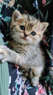 Wunderhübsches Tigermädchen sucht ein liebevolles