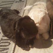 Maggie Theodor 1 Jahr - Widder-Kaninchen -