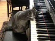 Klavierunterricht - Piano Lessons - Wels
