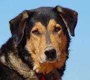 Roki - gutmütiger und genügsamer Hundemann