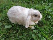 verschiedene Kaninchen Damen suchen