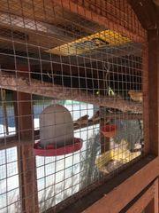 Vogelvoliere Holz Vogel nur mit