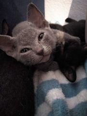 tierbörse babykatzen zu vergeben suche babykatze
