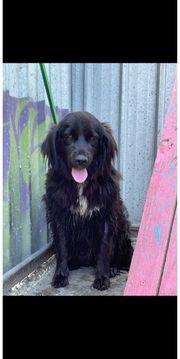 Tara - Traumhund ca 3 Jahre